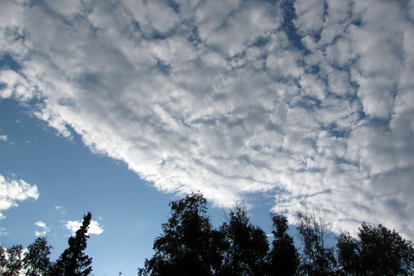 cloud filled sky at twighlight with silhouetted birch trees on the bottom